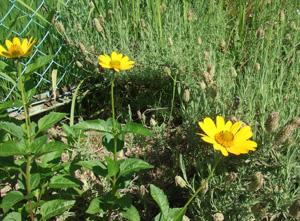 garden2011-7-13-7.jpg