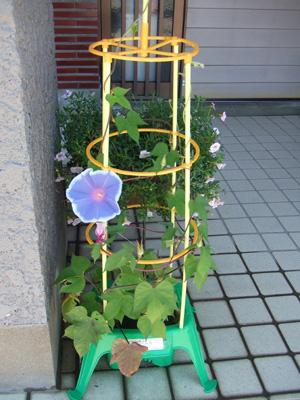 garden2011-7-13-9.jpg
