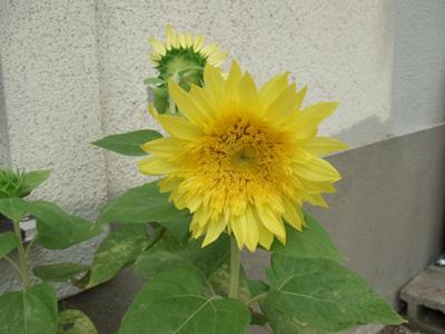 garden2011-7-29.jpg