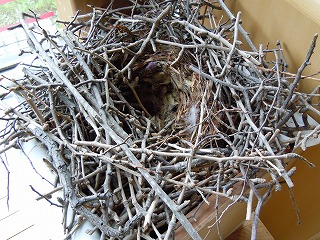 からすの巣