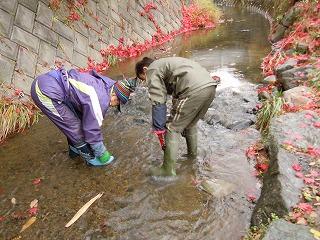 足を洗う川