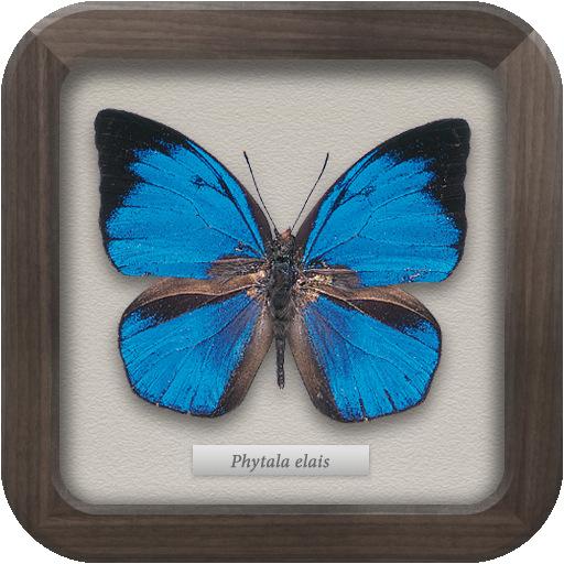 世界の昆虫セレクション|図鑑NEO for iPhone