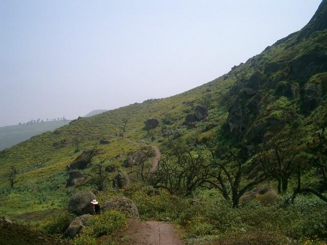 Lomas de Lachay 3
