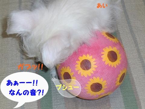 boal1
