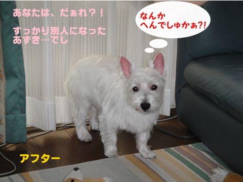 torimu1