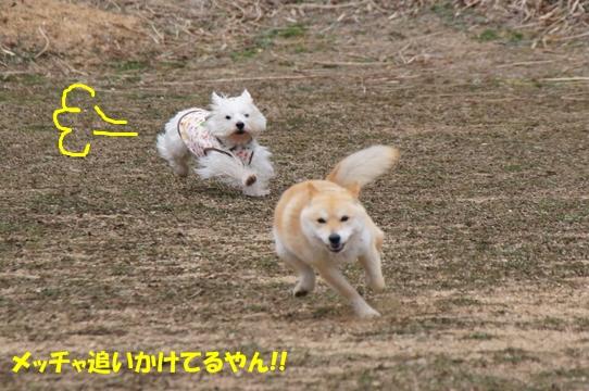 azuki5
