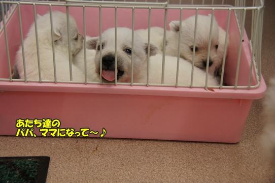puppy12