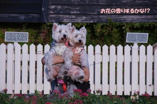 teddybear6