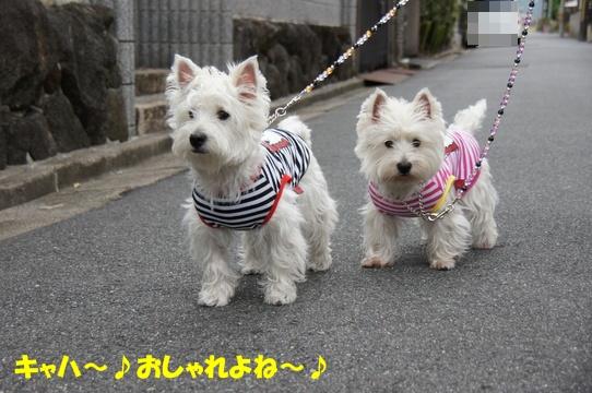 azukiai14