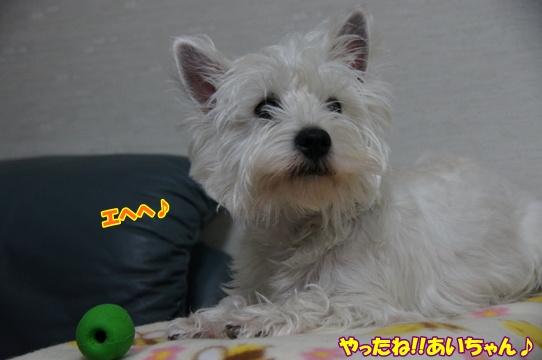 azukiai6