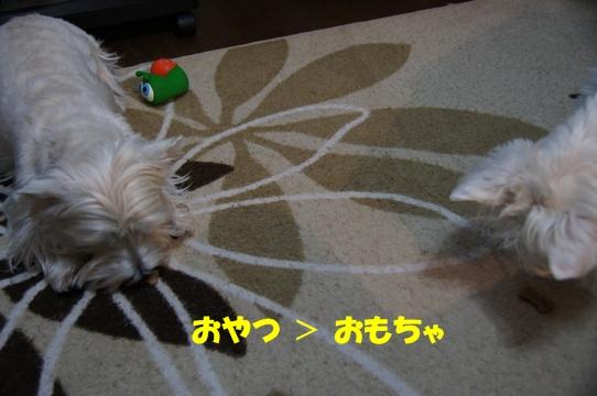 azukiai11