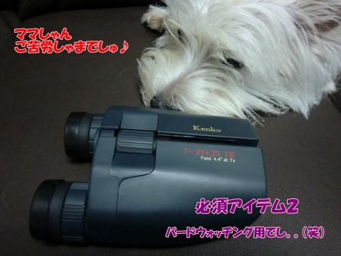 kiyosi2