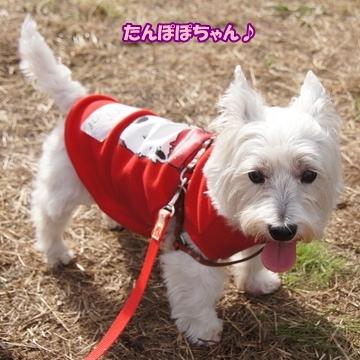 tachikawa14