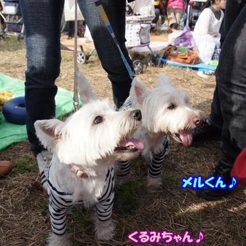 tachikawa10