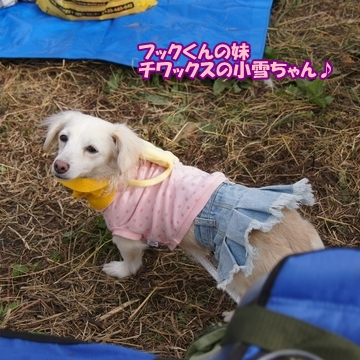 tachikawa4