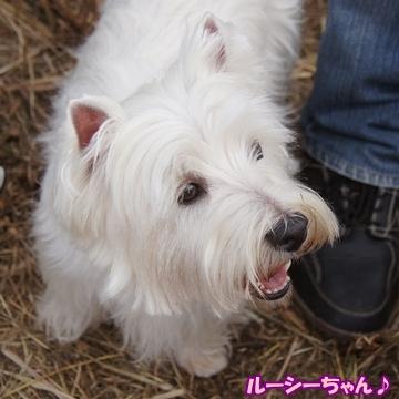 tachikawa19