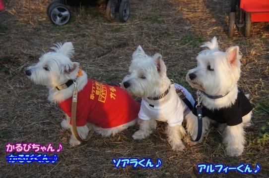 tachikawa5