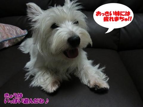 azukiai8