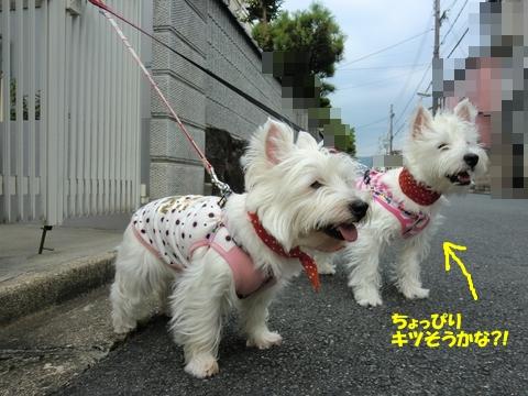 azukiai3