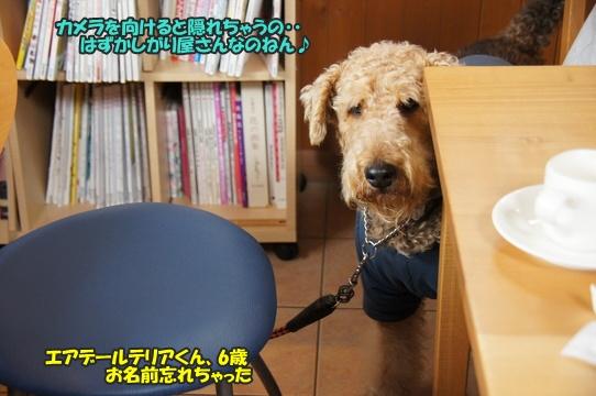 +dog4