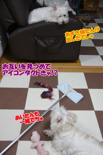 azukiai4