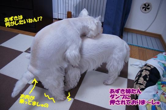 azukiai10
