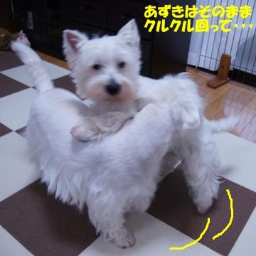azukiai12