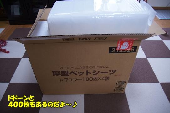 azukiai5