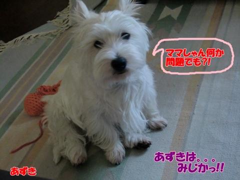 azuki_20100724211045.jpg