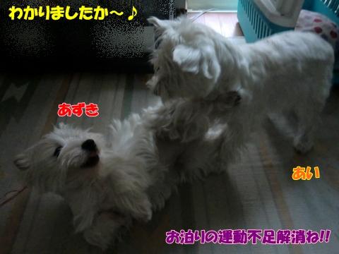 azukiai9