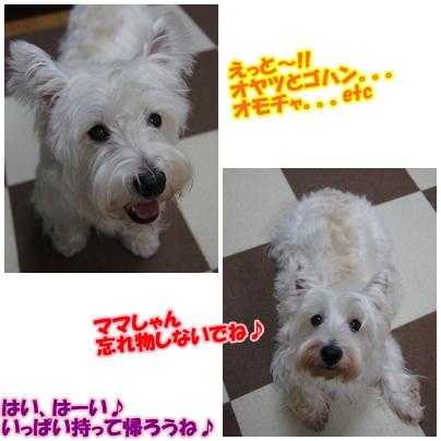 azukiai1