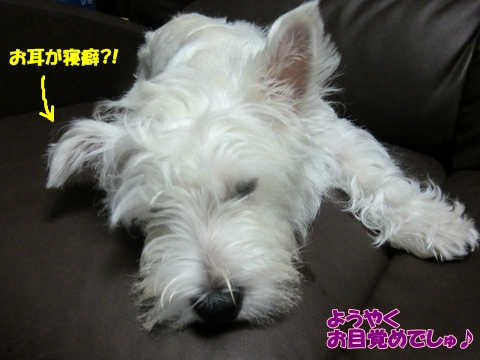 mimi_20100817154958.jpg