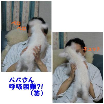 papasuki2