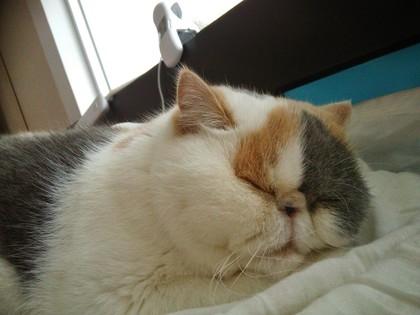 あずきちゃん爆睡