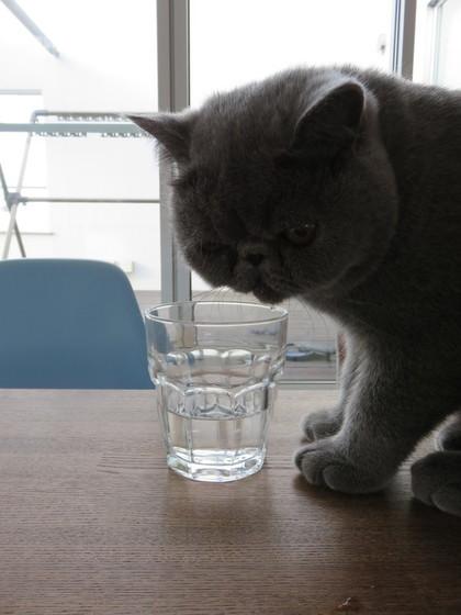 今日はお水いっぱいだ