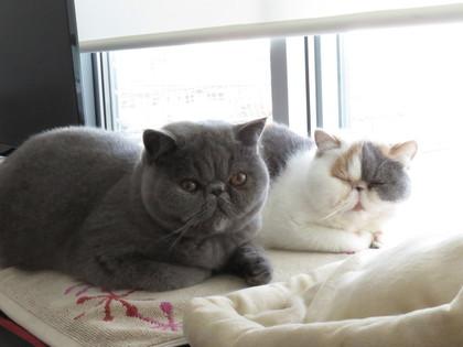 温まる猫と眠い猫