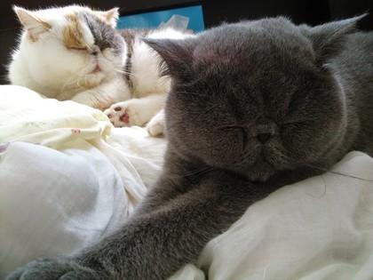 並んで寝てます