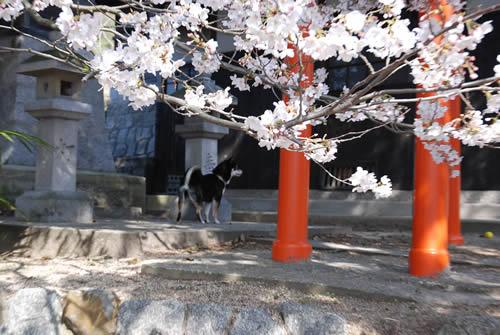桜キレイです