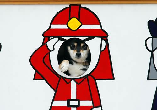 消防犬407