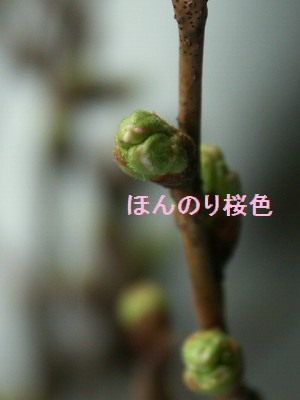 11mar07001.jpg