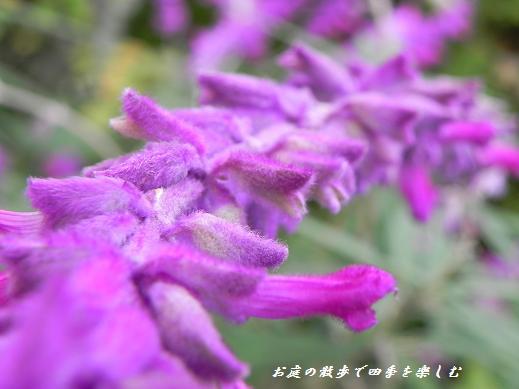 amejisutose-ji8.jpg