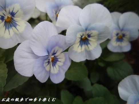 biora11.jpg