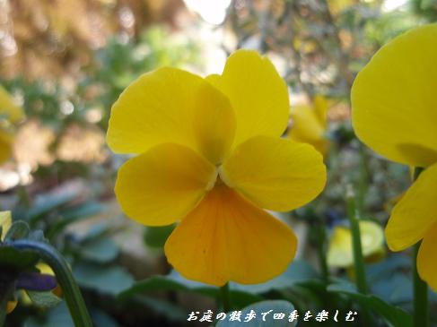 biora51.jpg