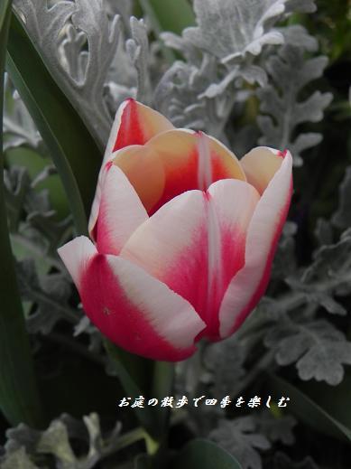 cyu-rip21.jpg