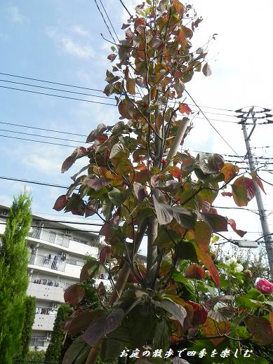 hanamizuki32.jpg