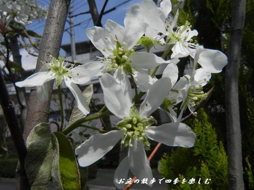 jyu-nberi-19.jpg
