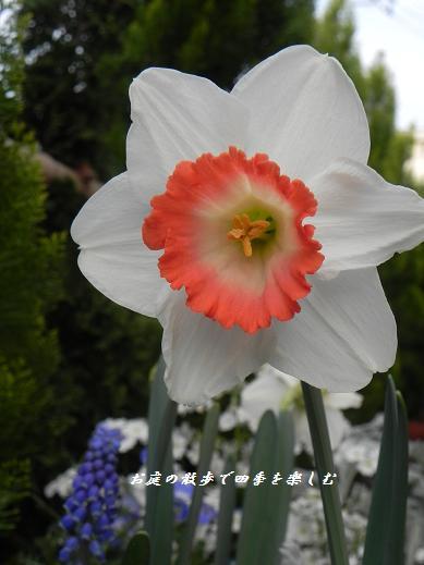 makuro8.jpg