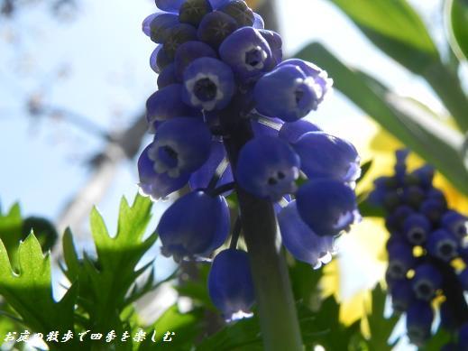 musukari21.jpg