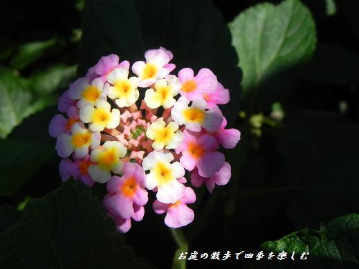 rantana8.jpg
