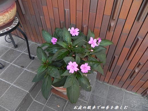 sanpachensu8.jpg